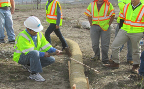 workers looking at tule for stormwater management work onthe field